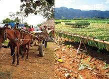 意気投合した旅人と、パンク自転車でタバコ農園を目指す キューバ旅行ルポ【後編】