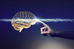 """脳科学で分類""""4タイプ別""""性格診断テスト"""